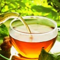 Green Tea for Constipation